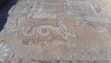 Photo of Storia di draghi e delfini: la città consapevole che la sua ricchezza veniva dal mare