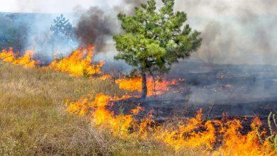 Photo of Emergenza incendi, Nino Spirlì scrive ai sindaci calabresi