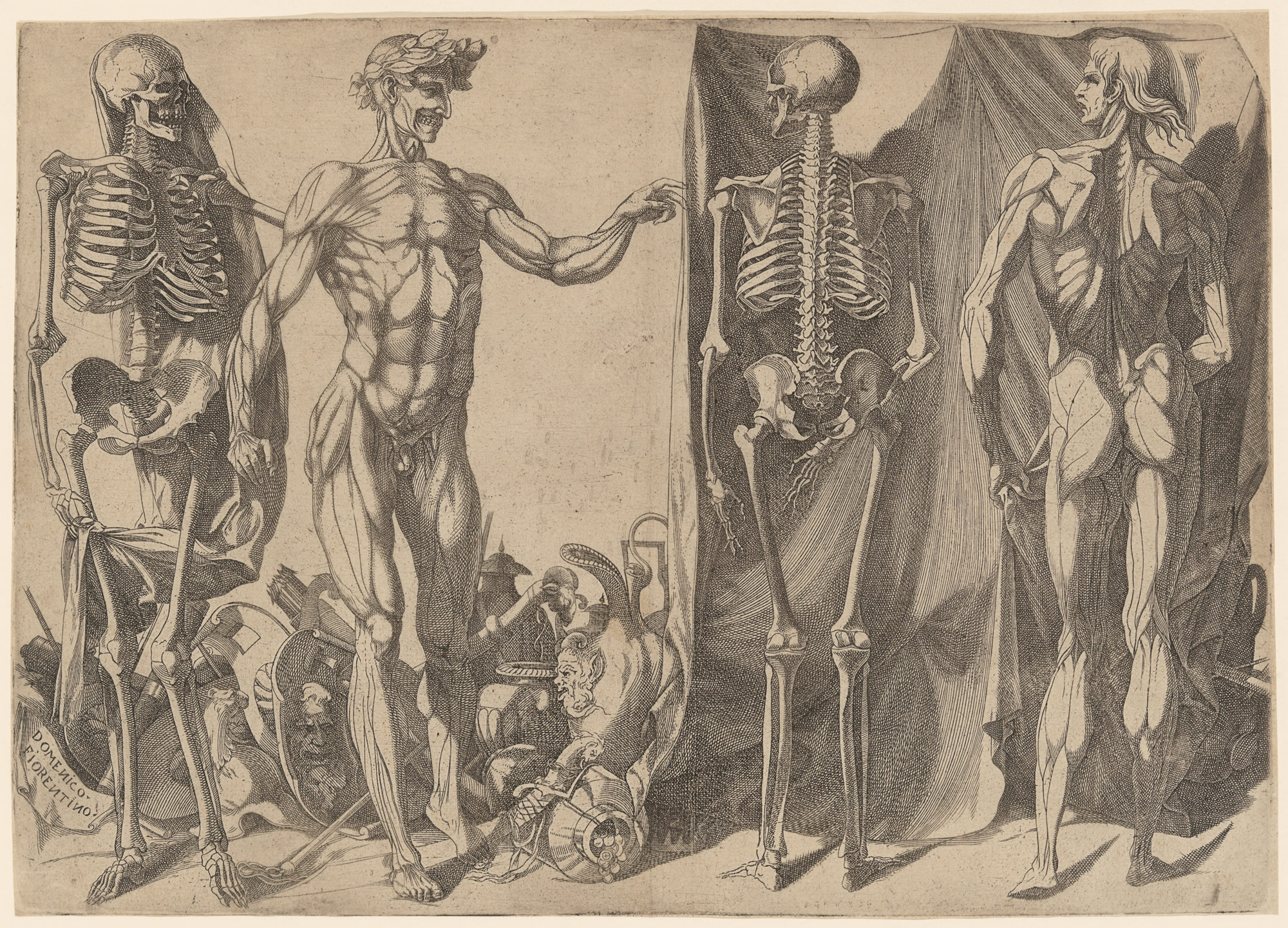 Anatomy In The Renaissance