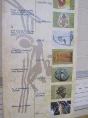biodiversity-secret-life-of-bees-metns-nov-2013-007