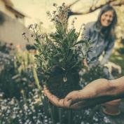 Садоводство и осознанность