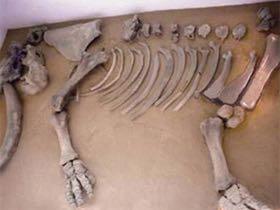 Gracias al esqueleto de mamut hallado durante su construcción; el ícono de la estación Talismán del metro de la ciudad es también un mamut.