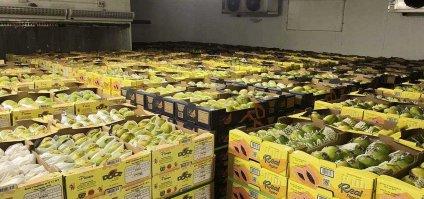[Exportadores de frutas do Vale do São Francisco têm prejuízo de R$ 570 mi]