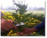flores-amarillas-2