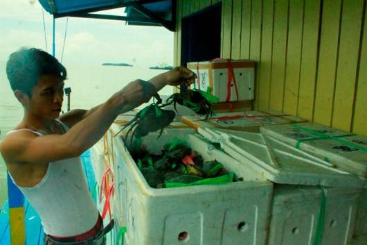 Kepiting bertelur seberat 2 ton berhasil diamankan Polairud Polres Tarakan.