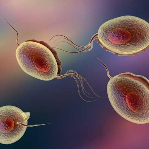 Most Common Sexually Transmitted Infections | Metromale ...