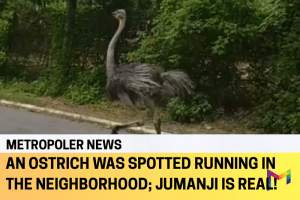 It's a Jumanji kind of day when you see an ostrich running freely in the neighborhood