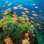 DOT celebrates World Environment Month, highlights responsible marine wildlife interactions