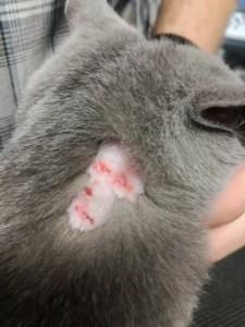 Alergie u kočky