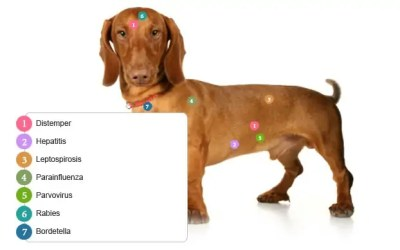Odčervení psa a štěňat