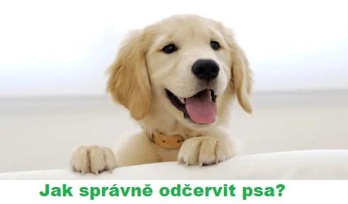 odčervení psa