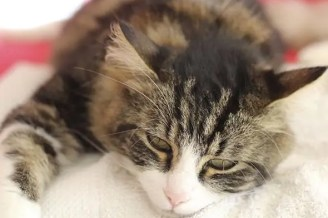 zánět dělohy u kočky