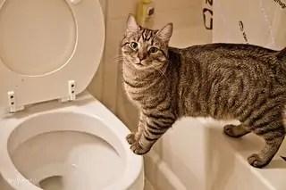 proč kočka močí mimo záchod?