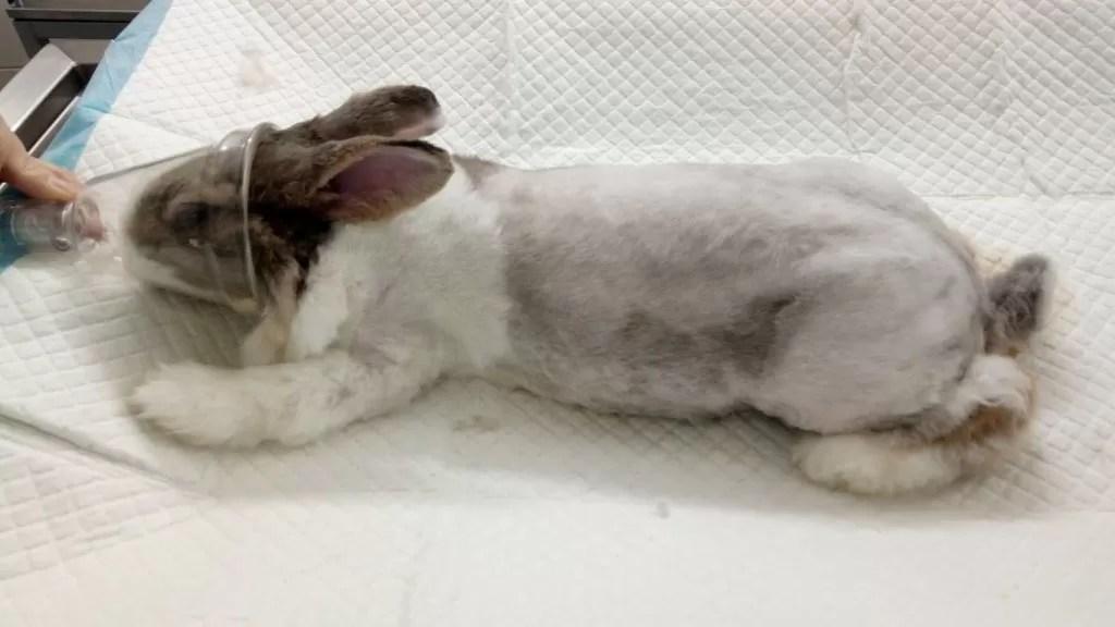 nemoci králíků