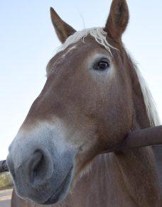brown horse at a dude ranch