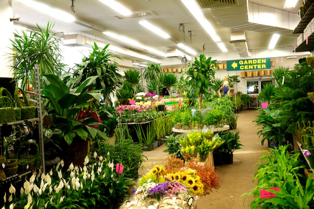 NJ and NYC Wholesale Flowers and Garden Center