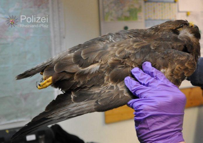 Donnersbergkreis Tiefgefrorenen Raubvogel entdeckt