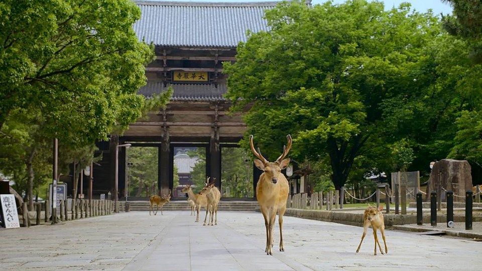 The Year Earth Changed: Deer