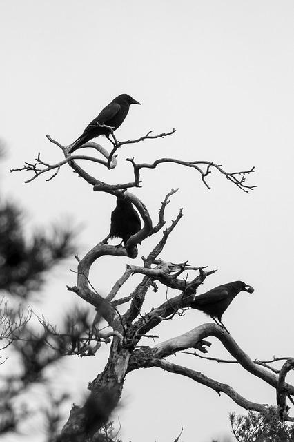 crow-1013048_640