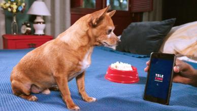 "Cão ""Estopinha Capixaba"" vira garoto-propaganda do Telecine"