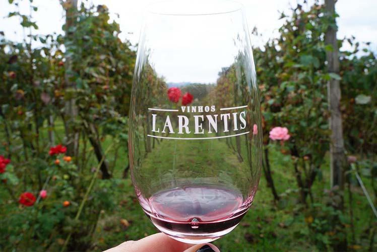 Capa Vale dos Vinhedos - Vinhos Larentis