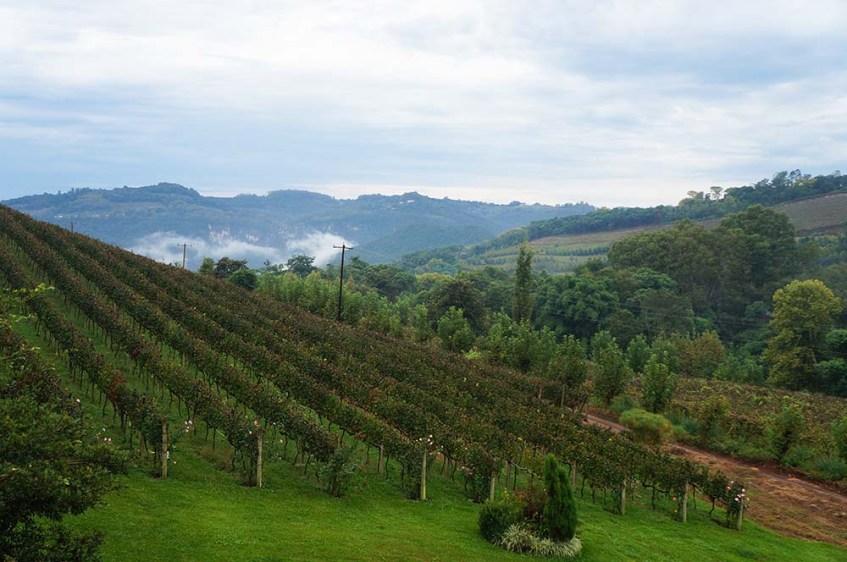 Vale dos Vinhedos - Pizzato Vinhas e Vinhos