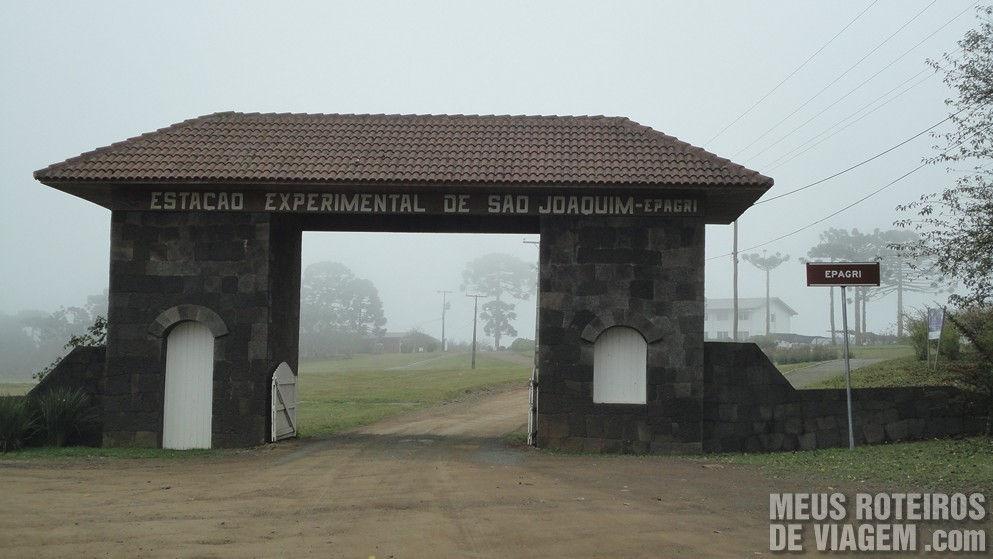 Maçãs na Estação Experimental da Epagri - São Joaquim / SC