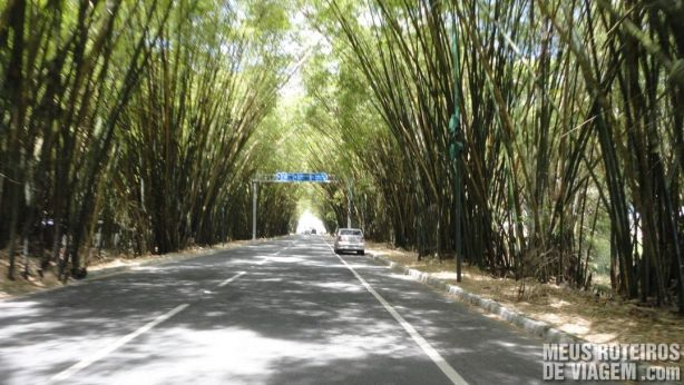 Bambuzal no acesso ao Aeroporto de Salvador