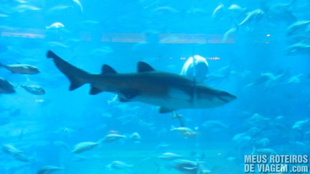 Tubarão no aquário do Dubai Mall