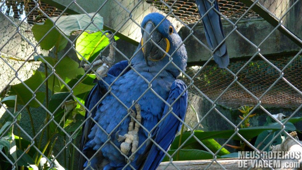 Arara Azul no Zoológico de Balneário Camboriú
