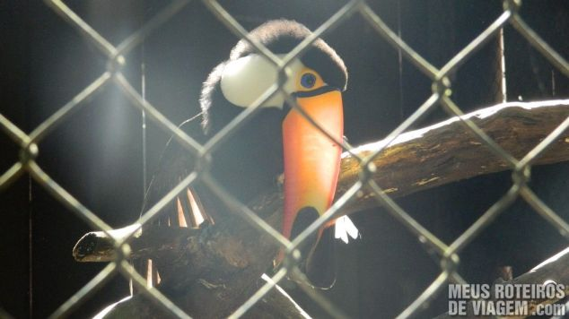 Tucano no Zoológico de Balneário Camboriú