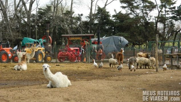 Animais no Zoo Lujan