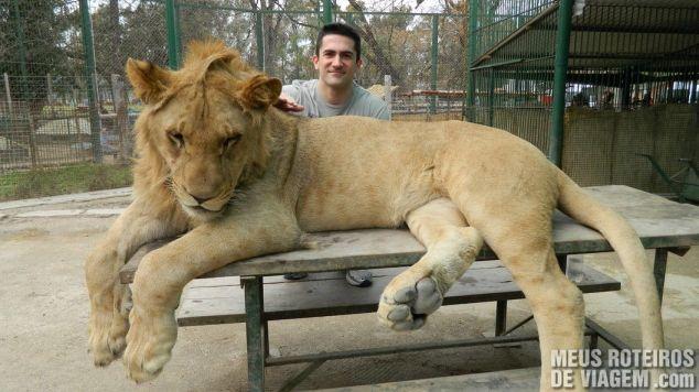 Leão neto