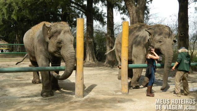 Elefantes no Zoo Lujan - Buenos Aires
