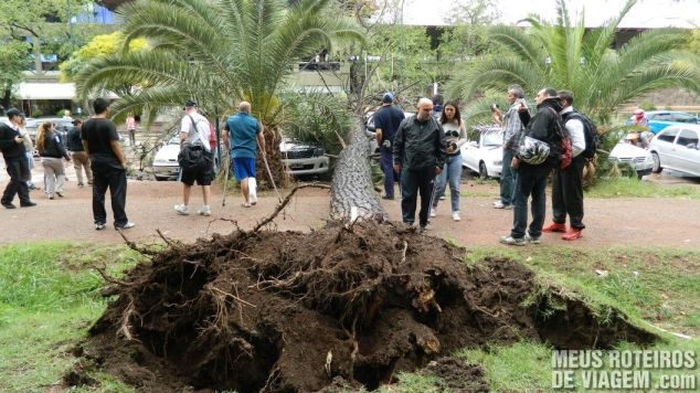 Árvore caída no Parque San Martin