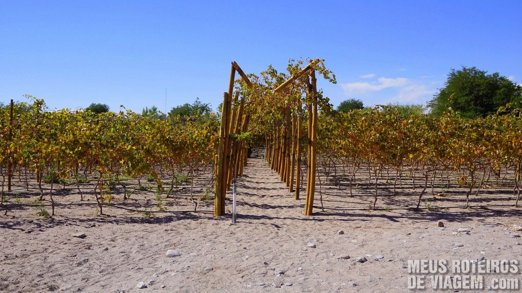 Tour do Vinho - San Pedro de Atacama, Chile