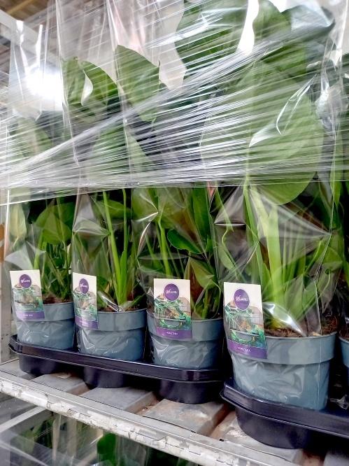 Planten bestelling