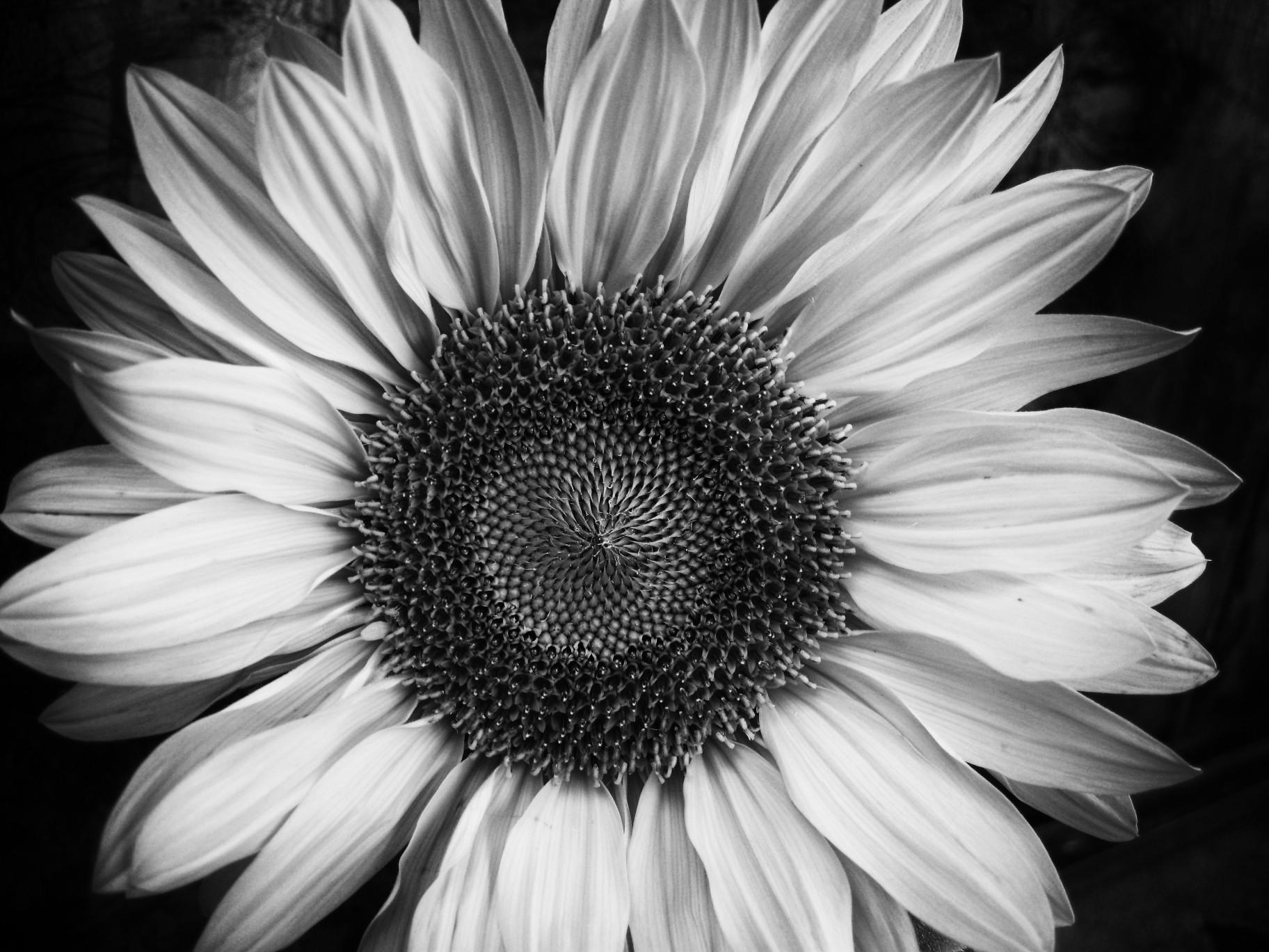Fall Sunflower Desktop Wallpaper صور انستقرام ابيض واسود روعة بجودة Hd ميكساتك