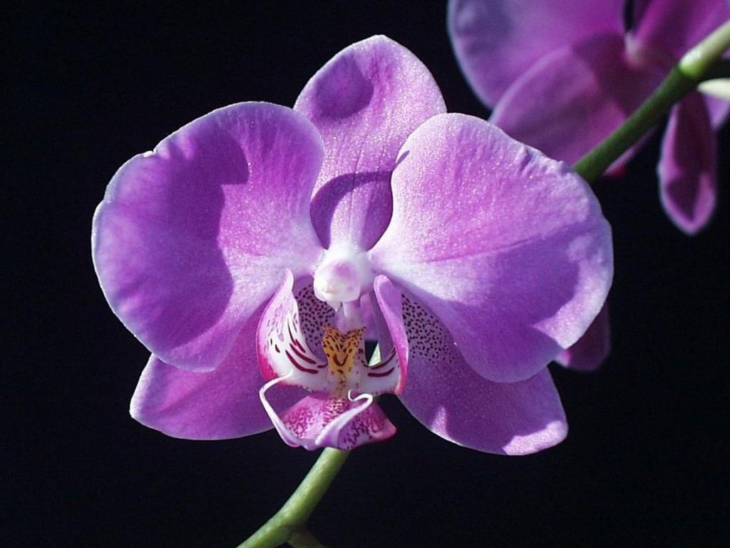 Animated Flower Wallpaper صور زهرة الأوركيد اجدد خلفيات ورمزيات Hd لزهور الأوركيد