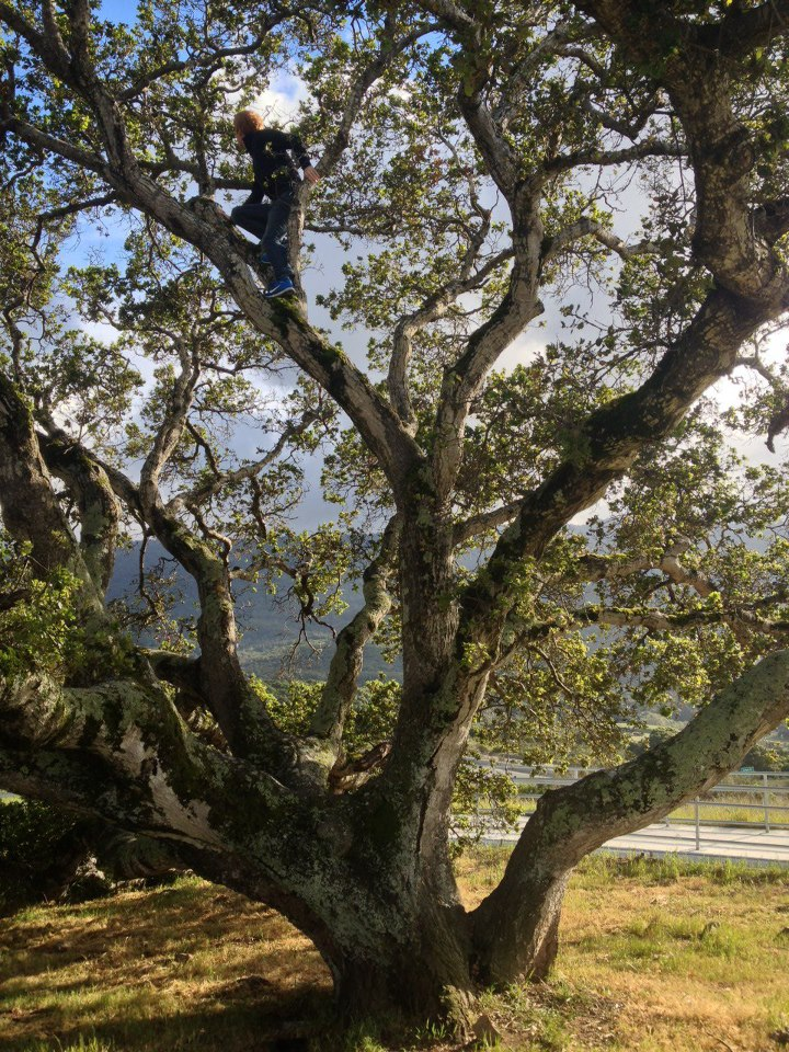 Girls Wallpaper Ideas صور اشجار جميلة في اجدد خلفيات ورمزيات شجر ميكساتك