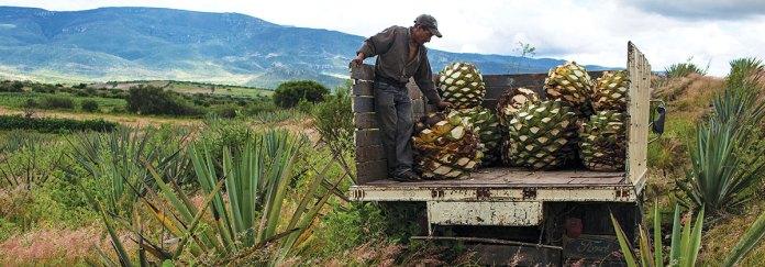 Recorre la ruta del mezcal | México Desconocido