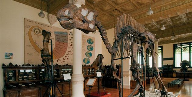 Museo de Geología