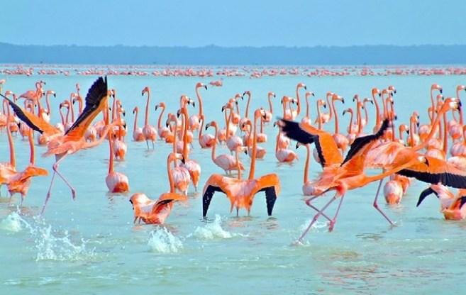 Tour a Celestún Yucatán: Entre Manglares y Flamingos