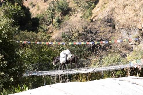 Nepal trekking (115)