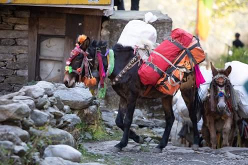 Nepal trekking (253)