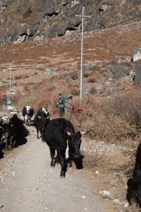 Nepal trekking (84)