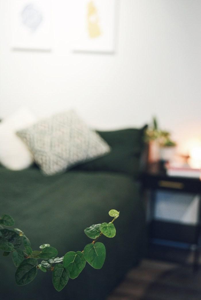 Indoor plants tiny home