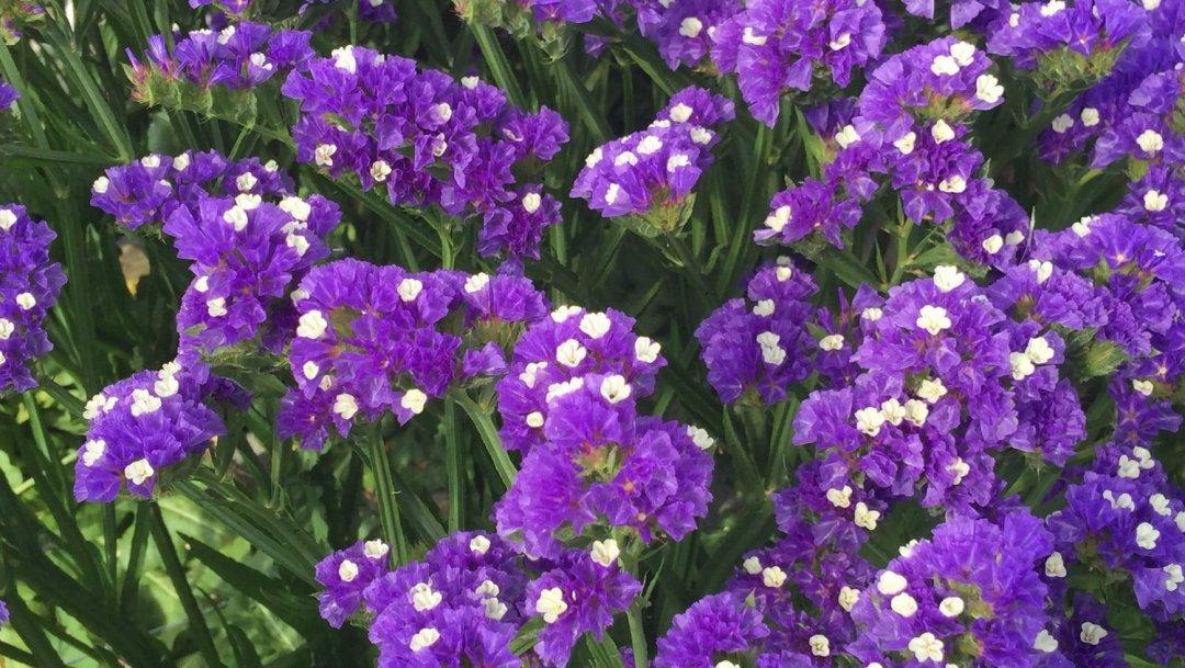 Mettre ses sens en éveil avec les fleurs VendéeFleurs Hocbon Ludovic (13)