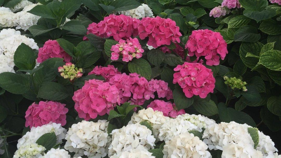 Mettre ses sens en éveil avec les fleurs VendéeFleurs Hocbon Ludovic (15)