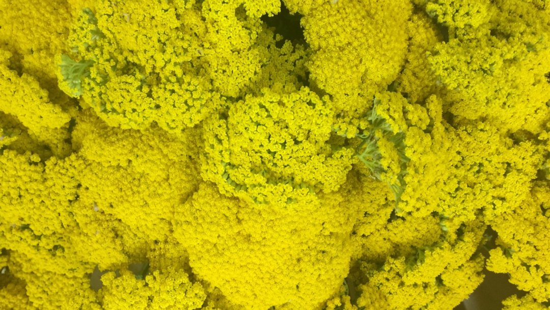 Mettre ses sens en éveil avec les fleurs VendéeFleurs Hocbon Ludovic (33)